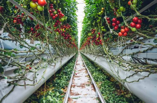 All You Need to Know to Grow Your Vertical Garden